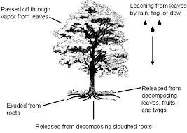 Landscaping Near <b>Black Walnut</b> Trees