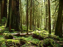 open letter post keystone win time to end natural forest logging old growth forests