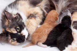 """Résultat de recherche d'images pour """"chaton nouveau ne"""""""