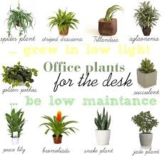 find a way by jwp low light and low maintance plants for your office desk cheap office plants