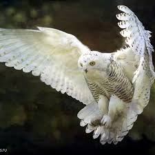 Amazing <b>Owls</b> - Home | Facebook