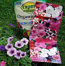 How to Plant a Pretty <b>Hanging Flower Bag</b>