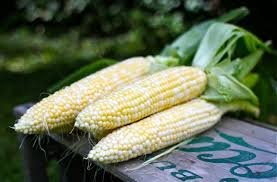 Image result for sweet summer corn