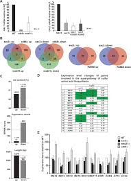 The Nuclear Pore-Associated <b>TREX-2</b> Complex Employs Mediator ...