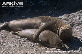 Ants And Elephant Seals