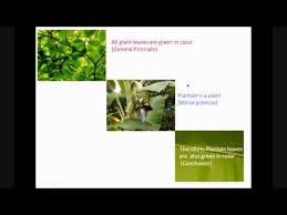 deductive and inductive reasoning with examples   biology videos    deductive and inductive reasoning   examples