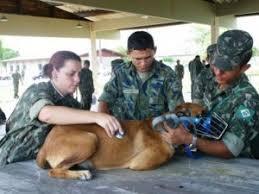 Resultado de imagem para Dia do serviço de veterinaria do exercito