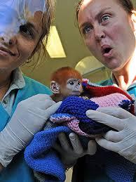 O filhote recebe cuidados das veterinárias Louise Grossfeld (esq.) e Mandy McLellan (dir.) - 1148130-7554-atm17