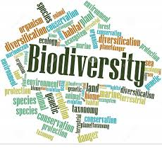 biodiversity on emaze biodiversity response policy suggestions eco technology solutions