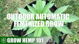 Timelapse <b>Outdoor Automatic</b> Grow From Seed To Harvest - YouTube