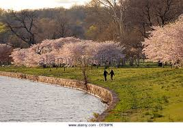 Image result for couple during spring