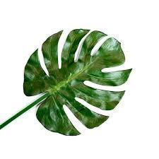 Faux <b>Monstera Leaf</b>