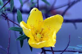 """Résultat de recherche d'images pour """"fleur jaune"""""""