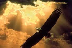 Bildergebnis für light eagle