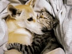 Bildergebnis für cuddling animals gif