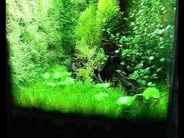 Image result for terrarium moss