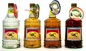Image result for mezcal