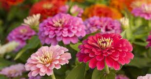 8 Popular <b>Summer Flowers</b>   House Method