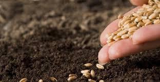 Risultati immagini per semina semi