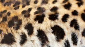 The History of <b>Leopard Print</b> | Mental Floss