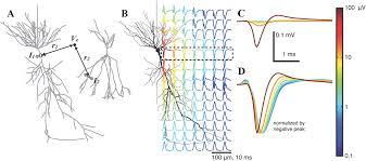 Микроэлектроника, нейрофизиология и машинное обучение ...