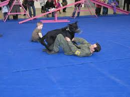 Military, <b>Police</b> & Security <b>Dog</b> Trainer - Master <b>Dog Training</b>