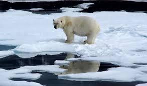 Svalbard in <b>Spring</b> - 10 Days   <b>Arctic</b> Travel Centre