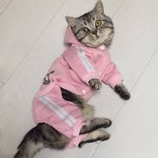 Fashion Cat Clothes For Cats Winter <b>Warm Cotton Cat</b> Clothing For ...