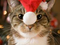 500+ <b>Christmas cats</b> ideas in 2020 | <b>christmas cats</b>, cats, christmas ...