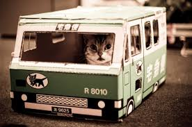 Image result for cat driving car