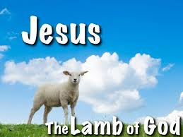 Image result for lamb jesus