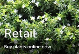 antz plants where urban greenlife thrives brisbane office plants