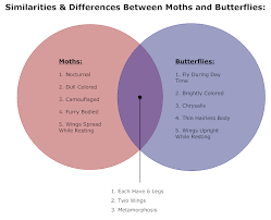 butterflies  amp  moths venn diagram