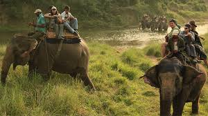 Image result for chitwan national park jungle safari