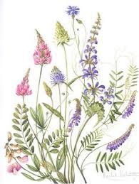Популярных изображений на доске «botanical illustration»: 55 ...