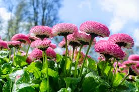spring season urdu essay mausam bahar ka my favourite season in spring season urdu essay mausam bahar ka my favourite season in poetry spring season