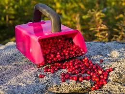 Купить <b>комбайн для сбора ягод</b> в интернет-магазине Всевдом24