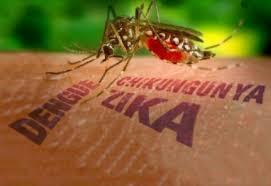 Resultado de imagem para mosquito da zika virus
