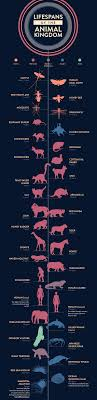 life spans of the animal kingdom infographic perspective simple quick pleasing color scheme and an interesting topic i believe putting the lifespan of animals in perspective is something i haven t focused on