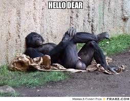 hello dear ... - Grande Gorilla Meme Generator Captionator via Relatably.com
