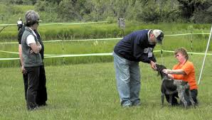 German Shorthaired Pointer Club of Michigan