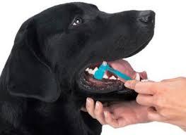 Resultado de imagen de sarro dental perros