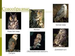 "Презентация к уроку ""Систематика птиц""."