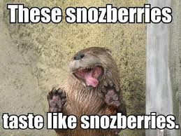funny-animal-memes-4.jpg via Relatably.com