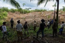 Resultado de imagen para fotos de destrucciones de arboles en la frontera
