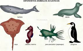 Image result for ANIMALES ACUÁTICOS