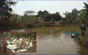 Image result for fish cum poultry farming