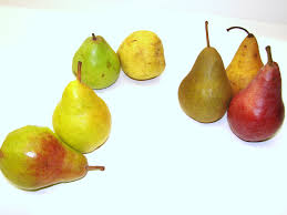 we are such stuff iv pears were my father s favorite fruit