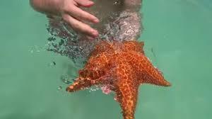 <b>Морские звезды</b> в Доминикане - красота неописуемая - YouTube