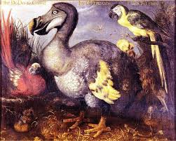 Image result for dodo painting